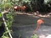 Aves Manatí Park Punta Cana