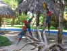 Loros del Manatí Park Punta Cana