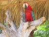 Loro de Manatí Park