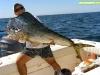 Pesca Punta Cana