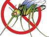 Cómo evitar los mosquitos